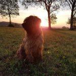 Lia im Sonnenuntergang